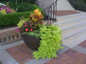 landscape containers Planters Plantings